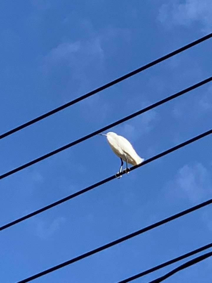 幸せの白い鳥?